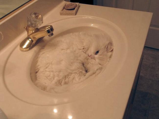 4579205-R3L8T8D-650-15-preuves-irrefutables-que-les-chats-sont-liquides-4