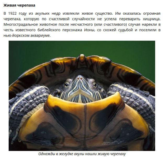 akul-zheludkah-nahodki-eto-interesno-poznavatelno-kartinki_889989397