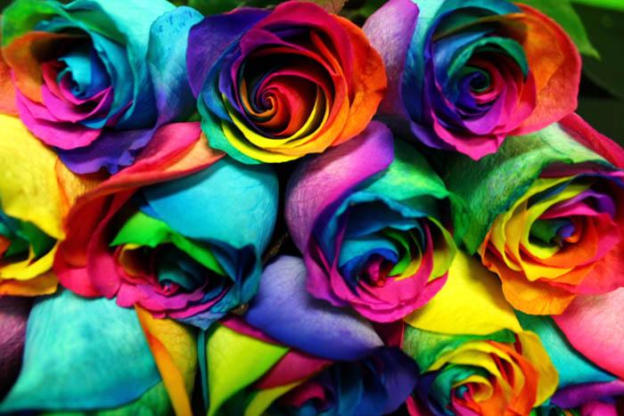 rainbow-roses-3