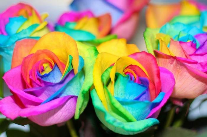 rainbow-roses-5