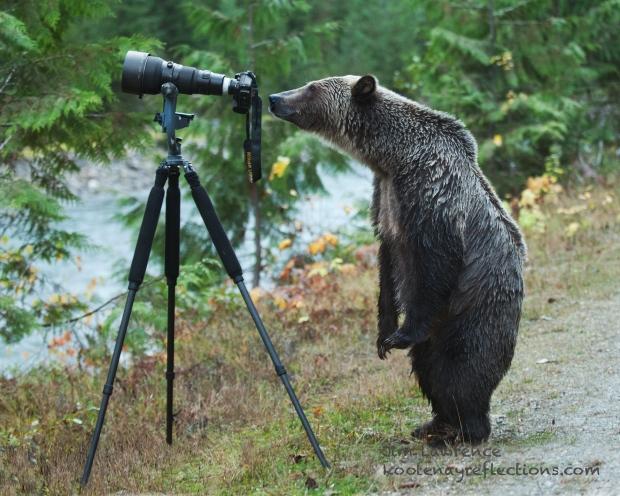grizzly-bear-photographer