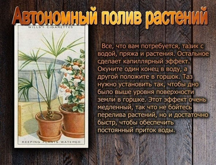 polzoy-kurili-otlichie-kartinki-smeshnye-kartinki-fotoprikoly_6060914313