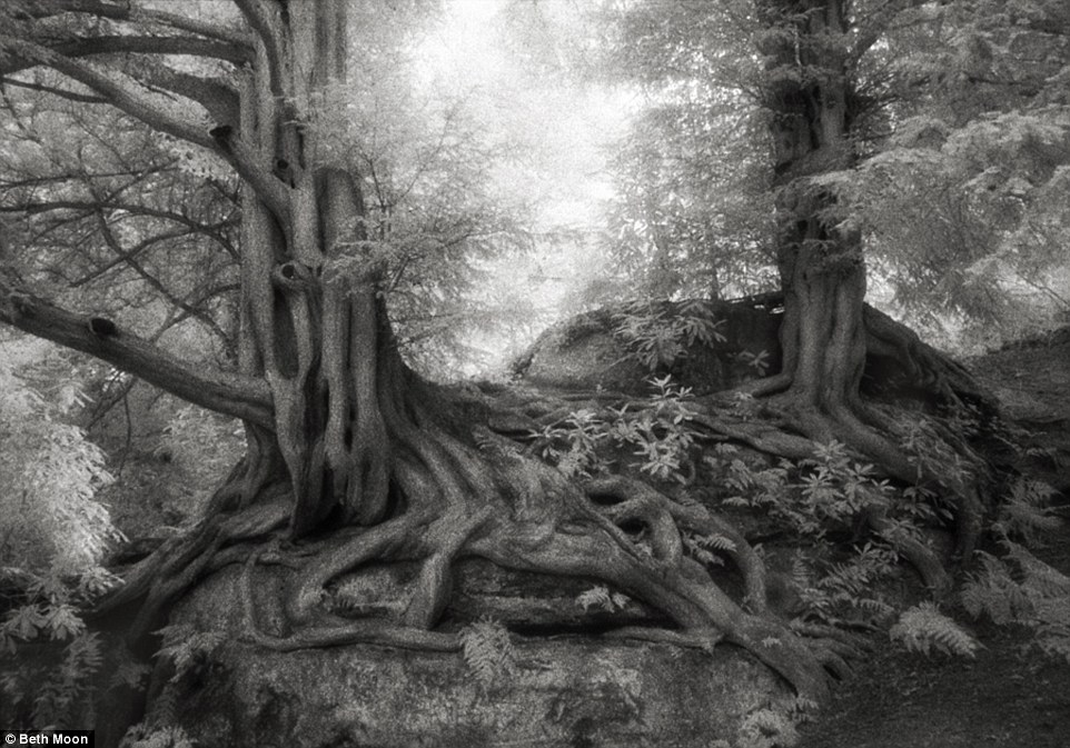 largesttrees 4
