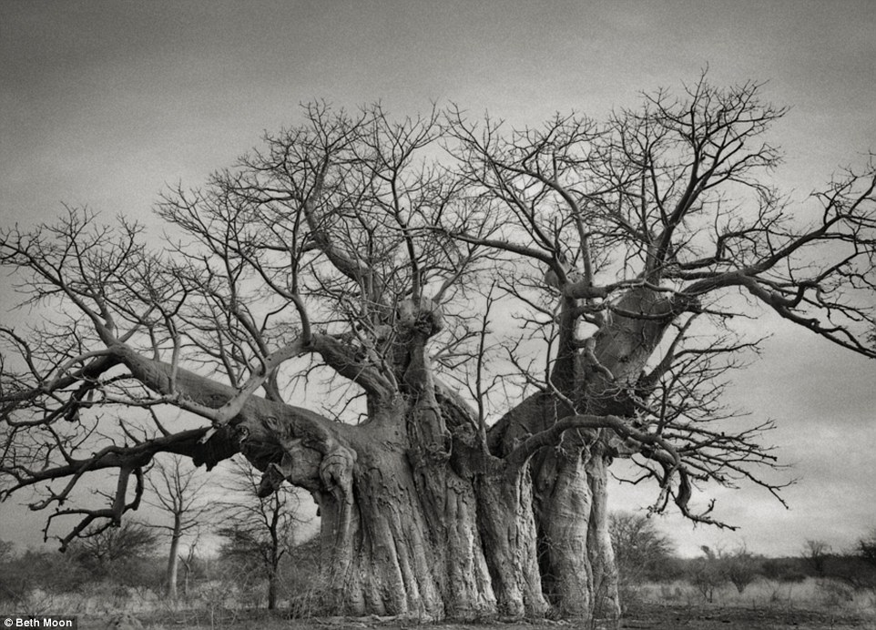 largesttrees 5