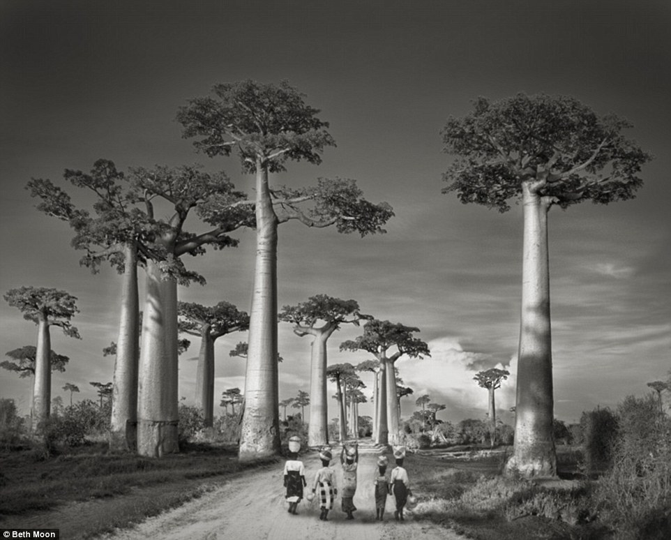 largesttrees 7