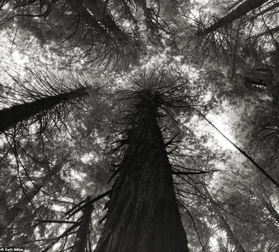 largesttrees 8