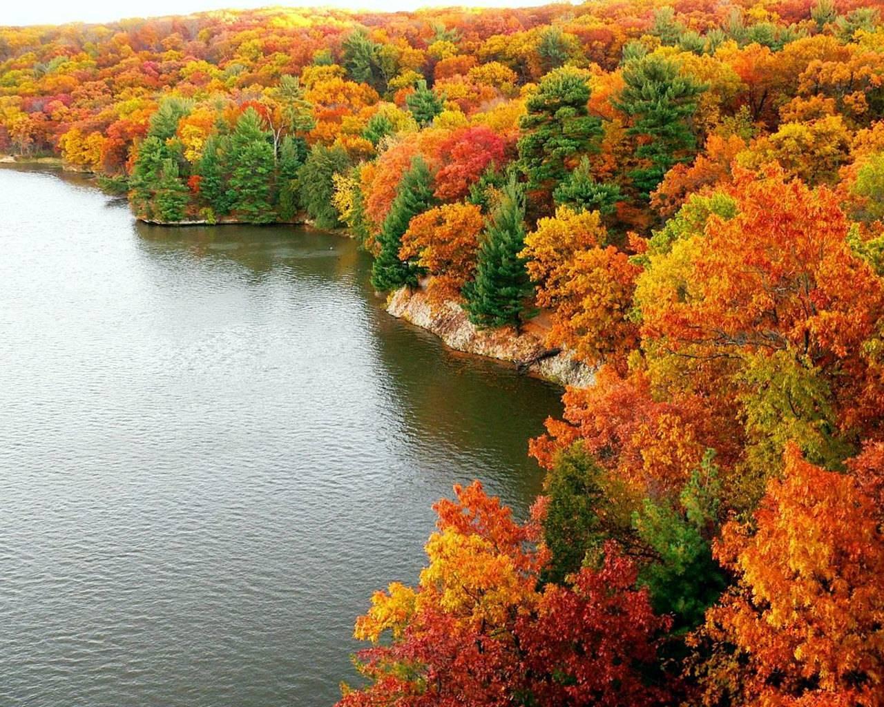 Autumn-Forest-Wallpaper