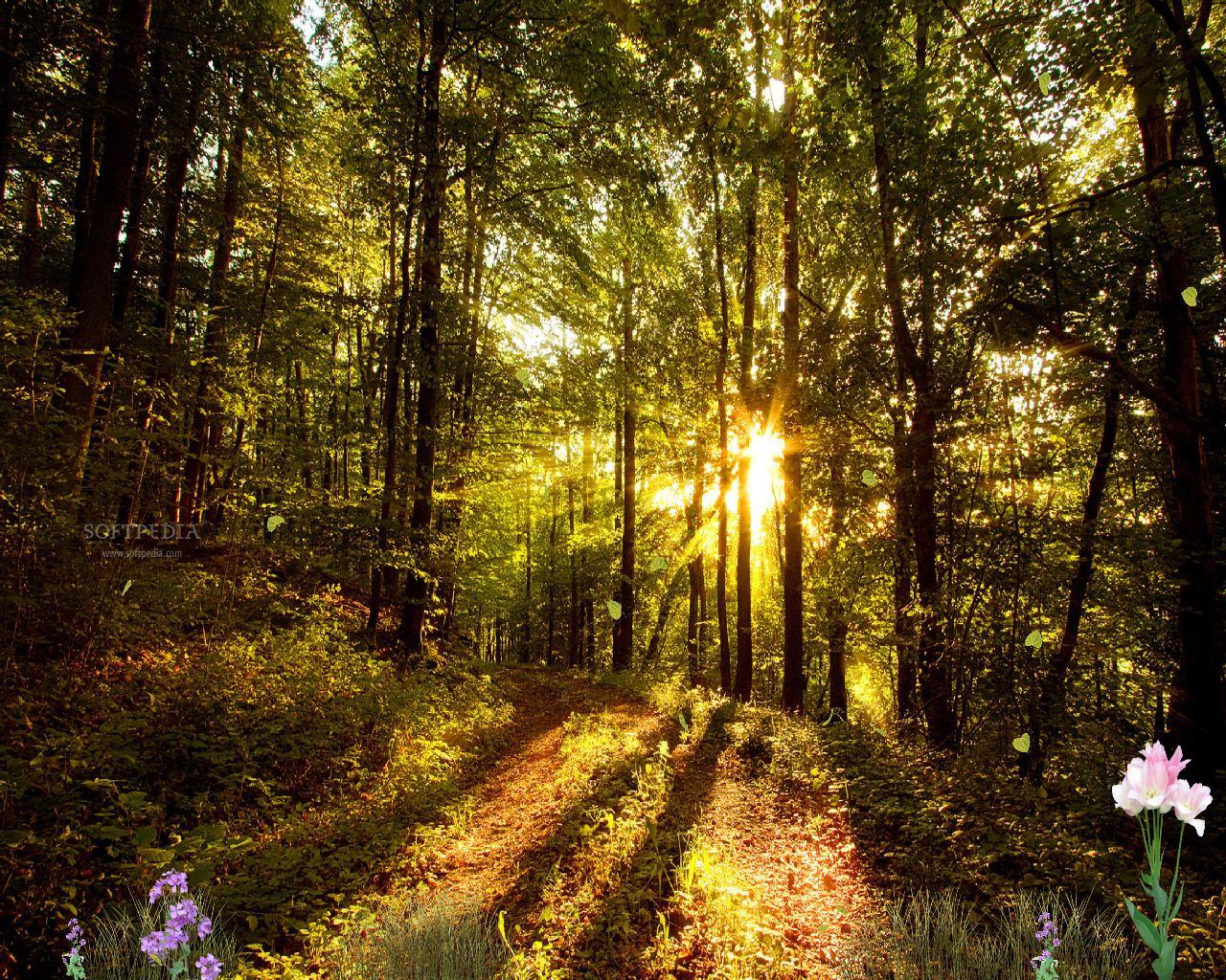 Beautiful-Forest-Screensaver