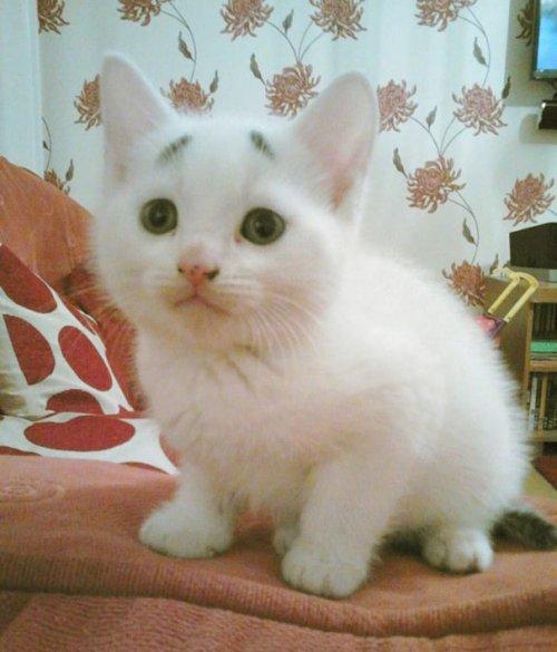 1430833859_ozadachennyy-kotenok-5