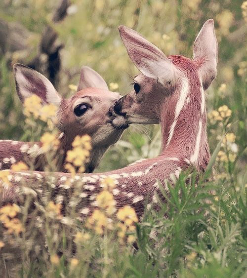 animal-kissing-deer