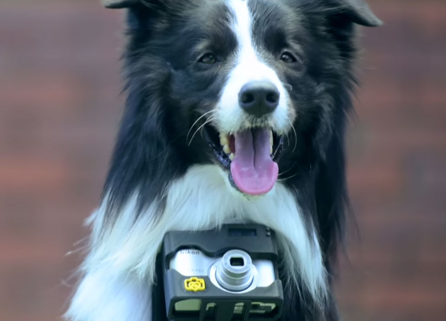 dog-takes-photos-heart-rate-monitor-phodographer-heartography-nikon-12