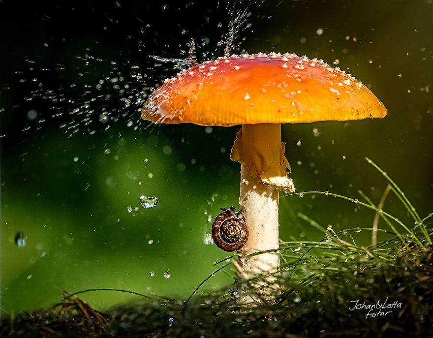 грибной зонтик 2