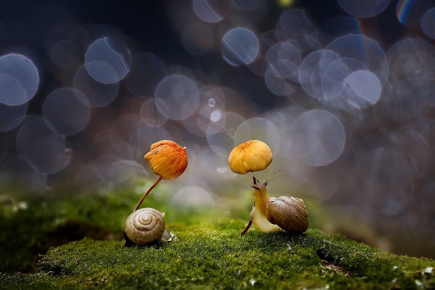 грибной зонтик