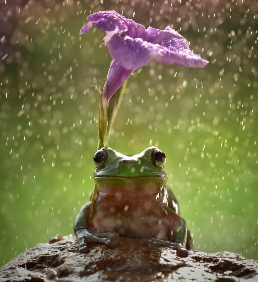 natural-umbrella-shelter-rain-animal-photography-14__880