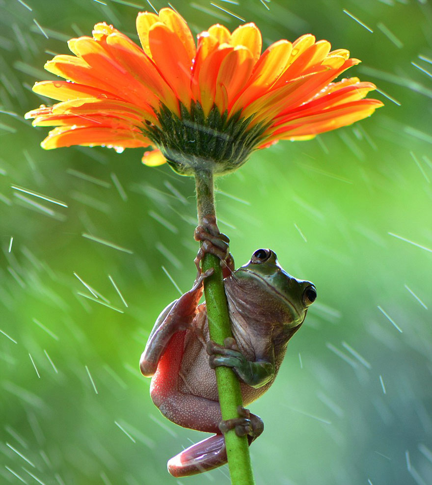 natural-umbrella-shelter-rain-animal-photography-26__880