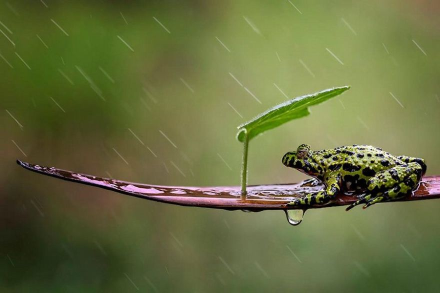 natural-umbrella-shelter-rain-animal-photography-29__880