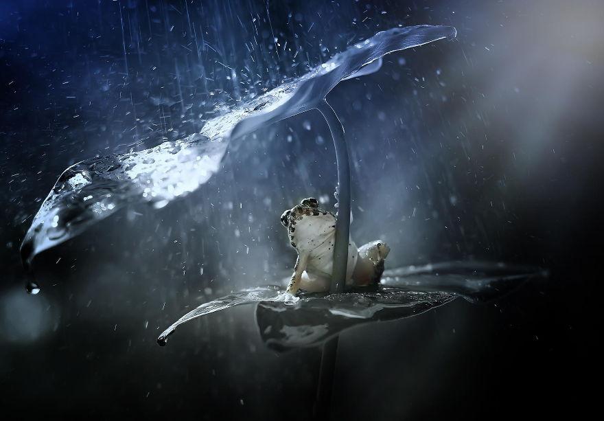снова зонтик-листочек