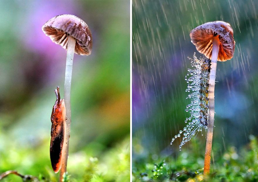unusual-frog-photography-56__880