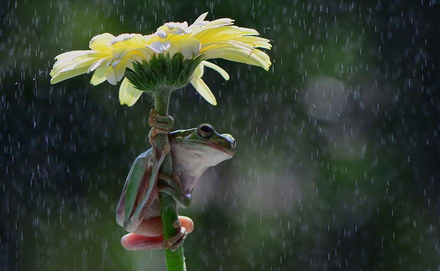зонтик-цветочек