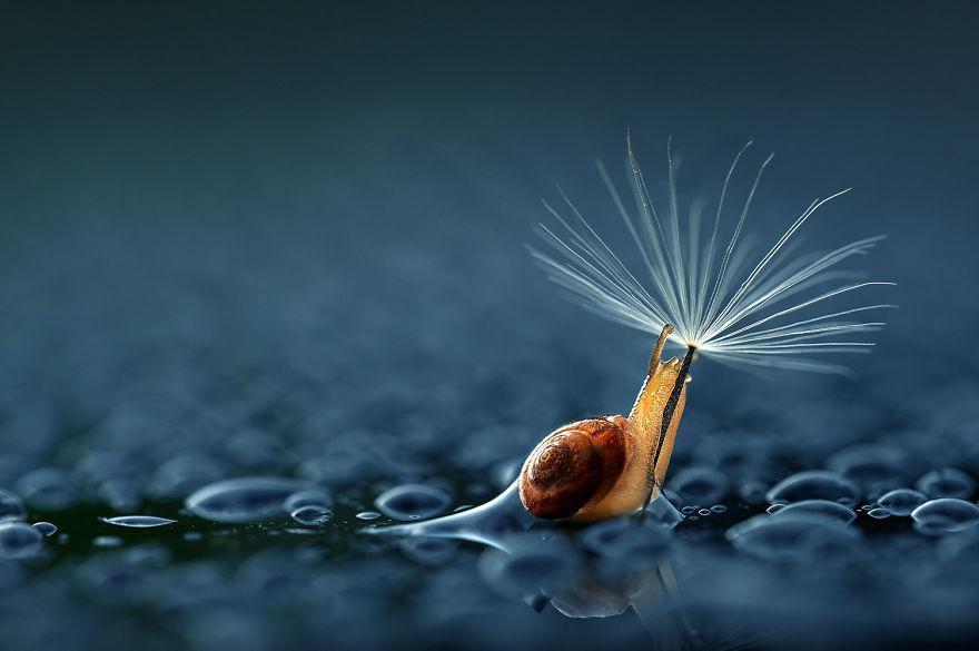 зонтик из одуванчика