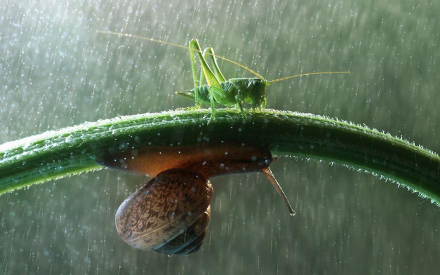 зонтик из травинки
