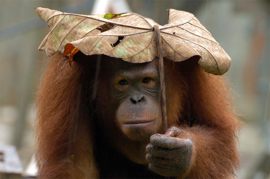зонтик-лист