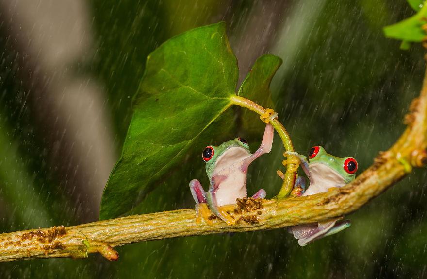 зонтик-листочек