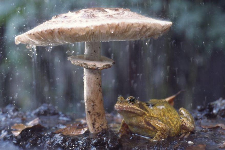 зонтик-поганка
