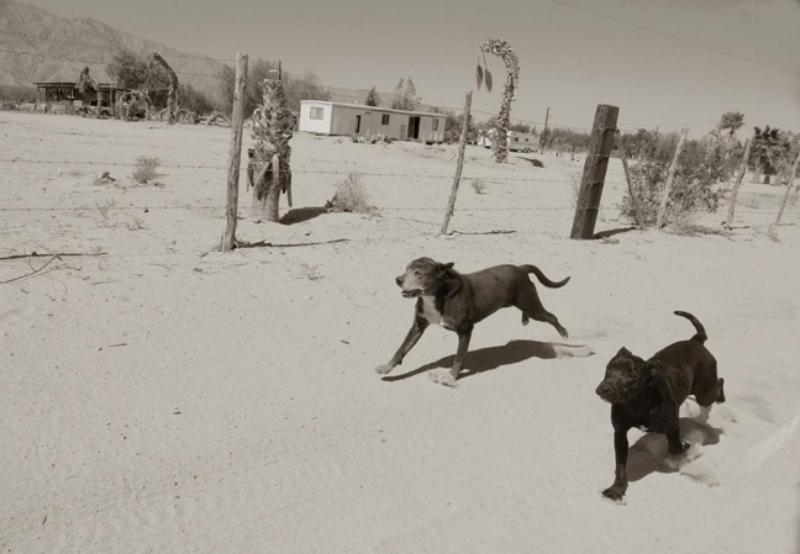 2_Running+Mates,+San+Felipe,+Mexico