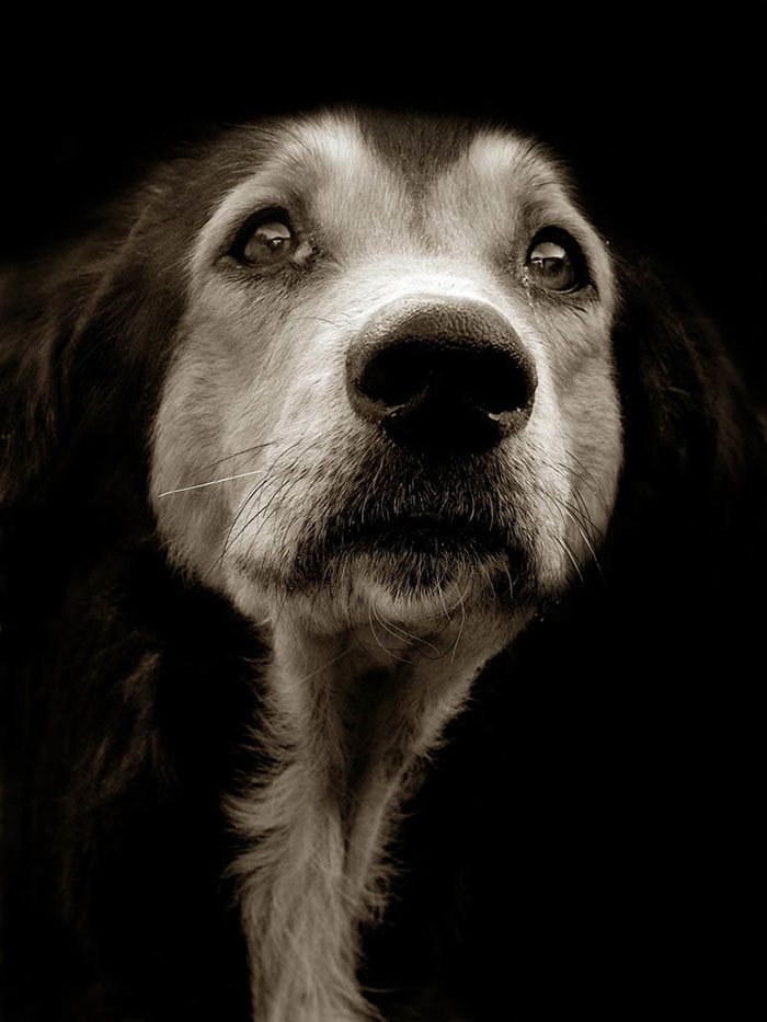 Celebrated-Authors-Animal-Portraits-Speak-to-Your-Heart13__700