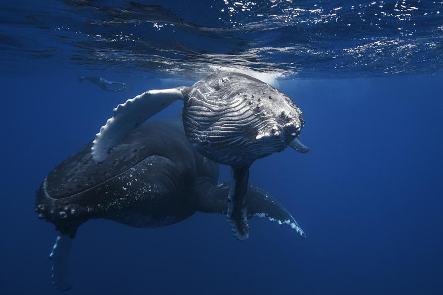 kitov-fotografii-podvodnye-krasivye-fotografii-neobychnye-fotografii_1634505480