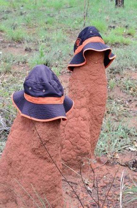termitniki-naryazhayut-razvlekayutsya-eto-interesno-poznavatelno-kartinki_258961254