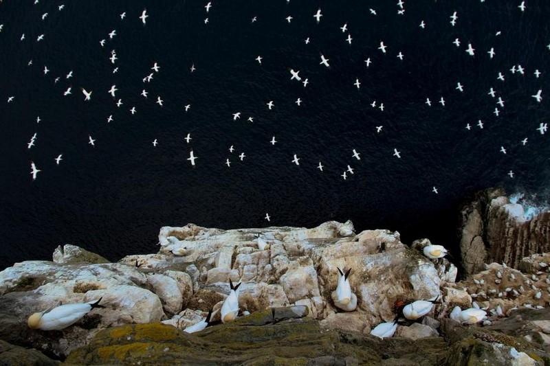 photography-wildlife-fotokonkursa-krasivye-fotografii-neobychnye-fotografii_1522119438