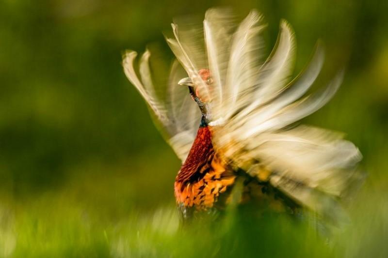 photography-wildlife-fotokonkursa-krasivye-fotografii-neobychnye-fotografii_1727371390