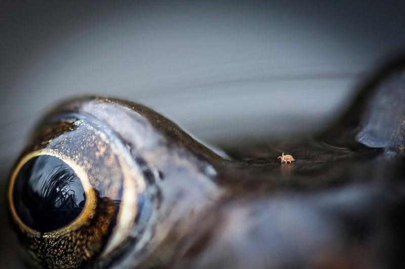 photography-wildlife-fotokonkursa-krasivye-fotografii-neobychnye-fotografii_2469633462