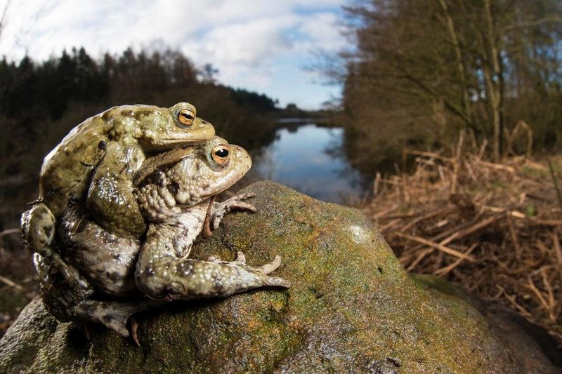 photography-wildlife-fotokonkursa-krasivye-fotografii-neobychnye-fotografii_35511005650