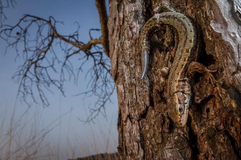 photography-wildlife-fotokonkursa-krasivye-fotografii-neobychnye-fotografii_5158229723