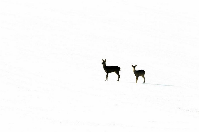 photography-wildlife-fotokonkursa-krasivye-fotografii-neobychnye-fotografii_7018423365
