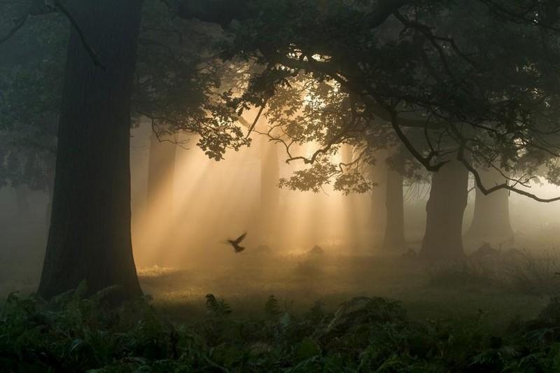 photography-wildlife-fotokonkursa-krasivye-fotografii-neobychnye-fotografii_708415442