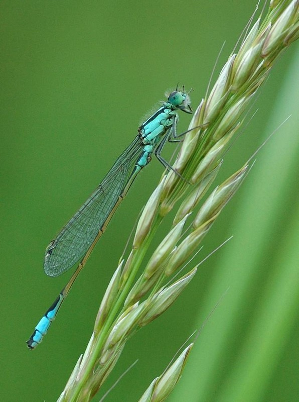 photography-wildlife-fotokonkursa-krasivye-fotografii-neobychnye-fotografii_8399637315