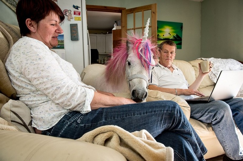 Couple keep 'unicorn' as a house pet, Kilmarnock, East Ayrshire, Scotland - 01 Sep 2015