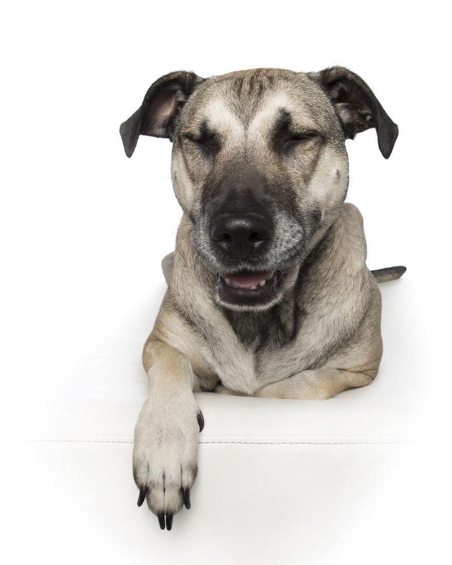 Zen Dogs 11