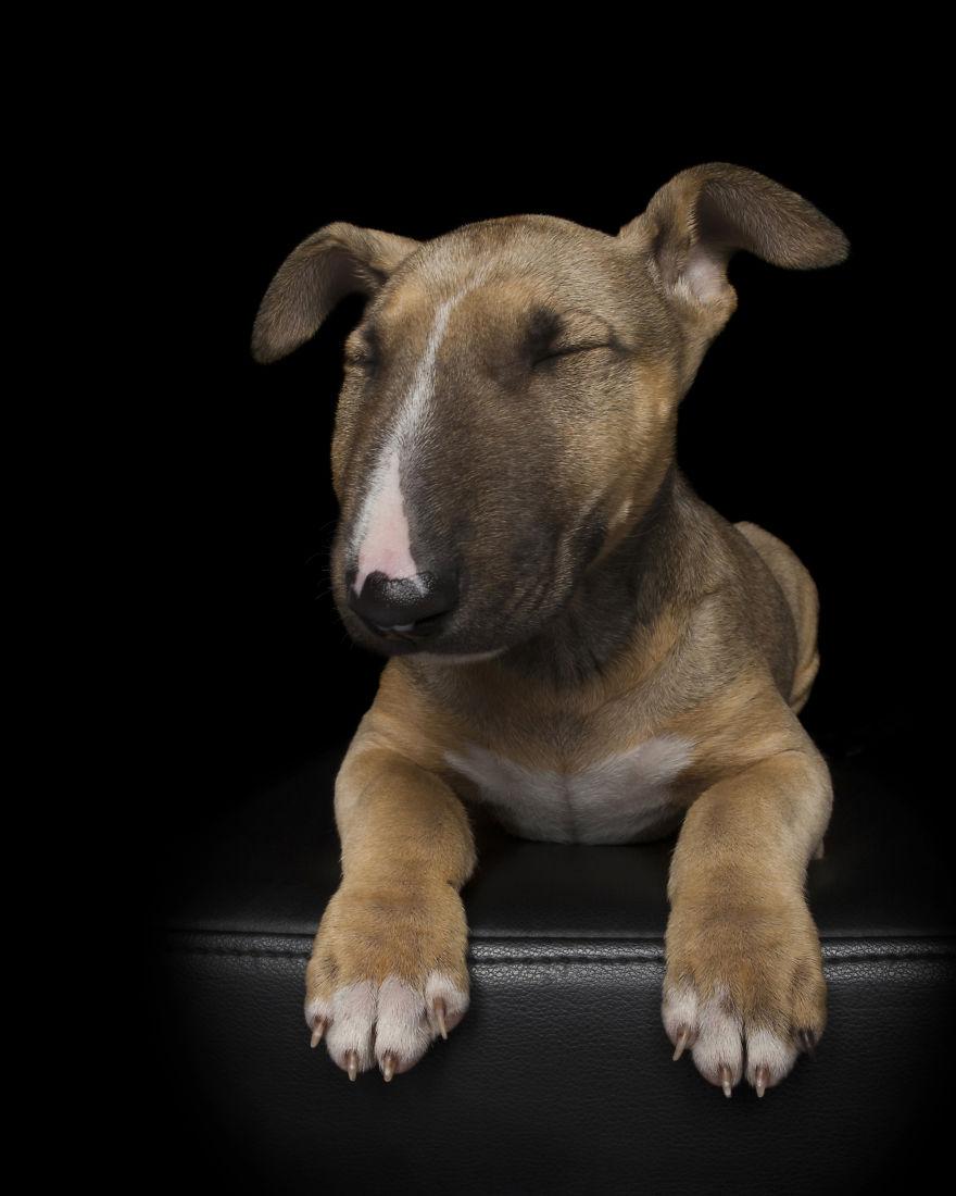 Zen Dogs 5