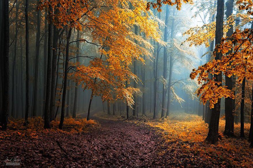 dreamlike-autumn-forests-janek-sedlar-11__880