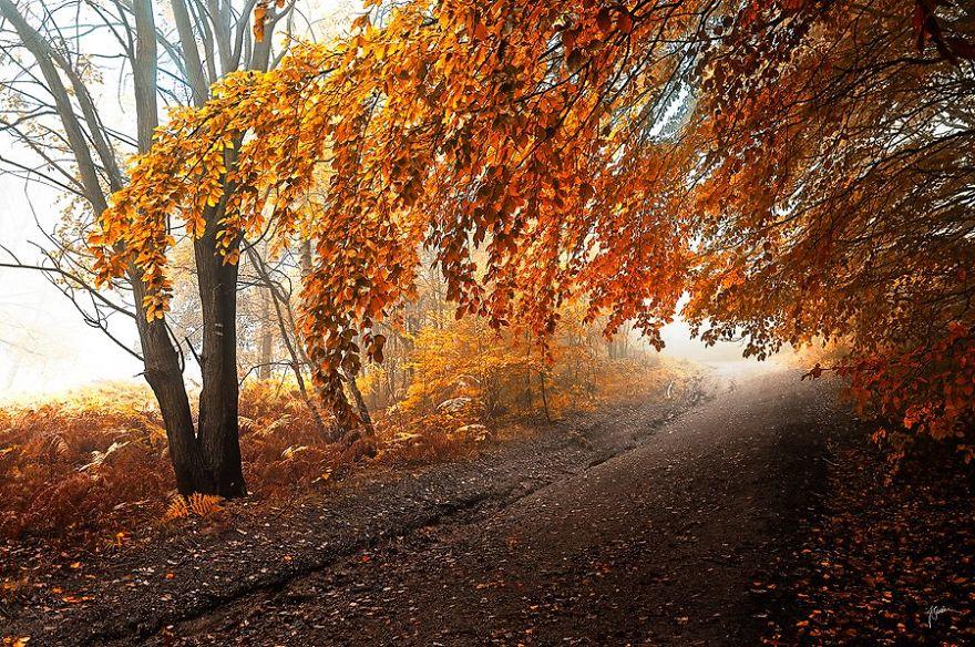 dreamlike-autumn-forests-janek-sedlar-1__880