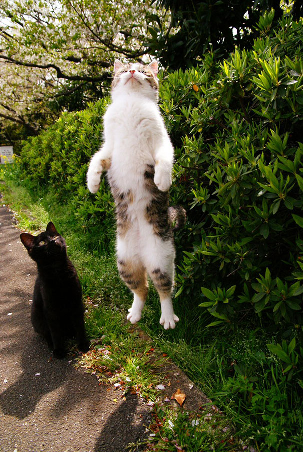 funny-perfectly-timed-cat-photo-13__605