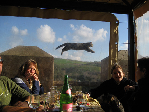 funny-perfectly-timed-cat-photo-56__605