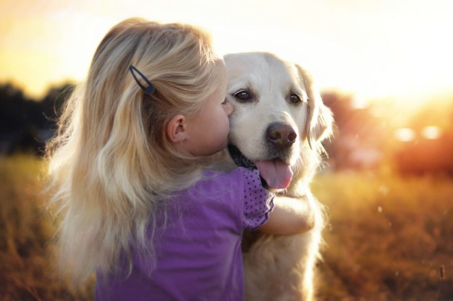 yes-dogs-also-have-best-friends-i-want-to-show-you-the-friends-of-my-golden-retriever-mali-13__880
