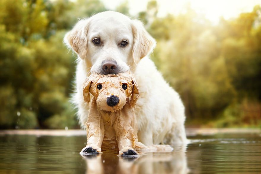 yes-dogs-also-have-best-friends-i-want-to-show-you-the-friends-of-my-golden-retriever-mali-19__880