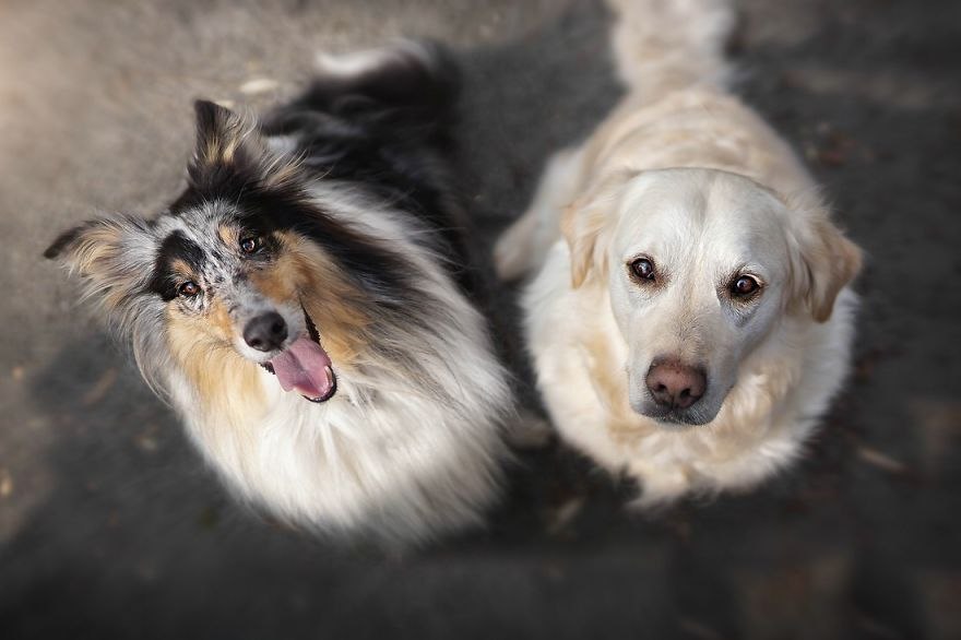 yes-dogs-also-have-best-friends-i-want-to-show-you-the-friends-of-my-golden-retriever-mali-23__880